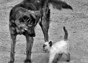 Бездомные собака и котенок