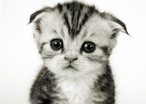 Грустный черно-белый котенок