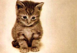 Котенок грустит