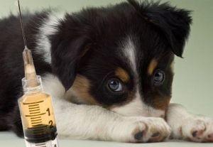 Лигфол для собак