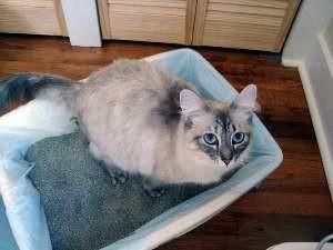 Понос у кошки