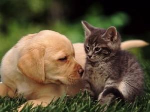 Антигистаминные средства для кошек и собак