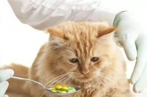 Как коту давать дронтал