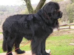 Собака Водалаз