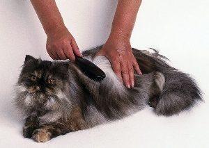 Массажные щетки для кошки