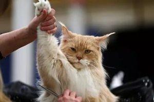 Приучаем кота к расчесыванию