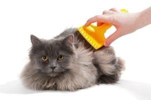 Пуходерки для кошек