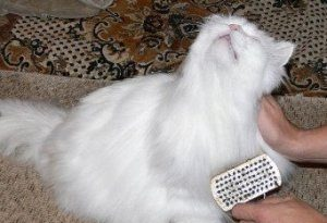 Расчесываем кошку
