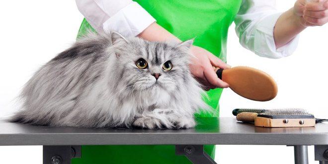 Собираем арсенал домашнего парикмахера: чем расчесывать длинную шерсть у кошек
