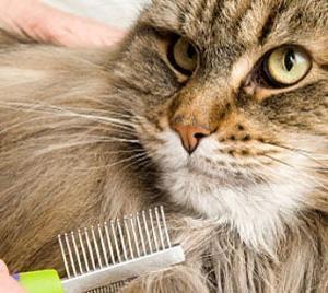 Ухаживаем за шерстью кота