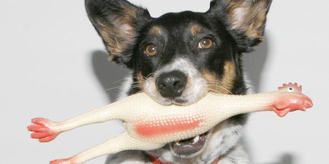 Почему моя собака любит прятать свои игрушки?