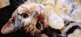 Еще пять мифов о котах