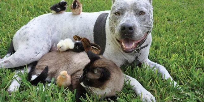 Взаимоотношение собаки с другими животными