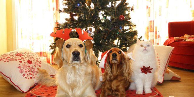Безопасность для домашних питомцев в Новый год