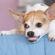 Как справиться с агрессией у собак