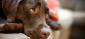 Чего добивается собака, когда смотрит «извиняющимся» грустным взглядом